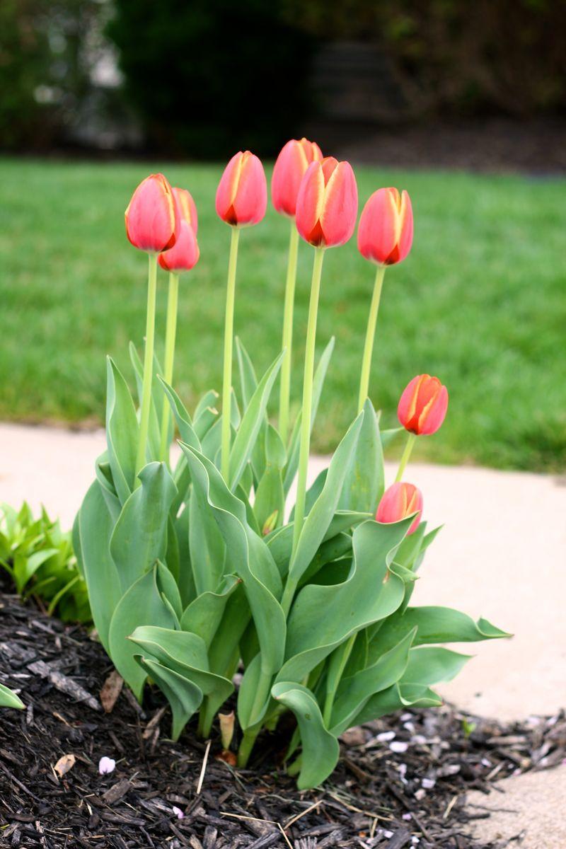 201203 spring 1359