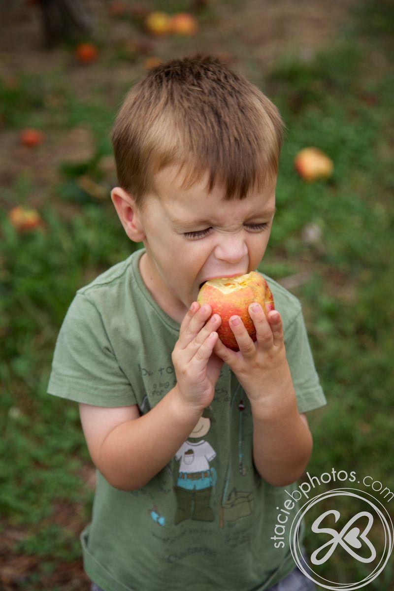 Apple picking 09012012 14503